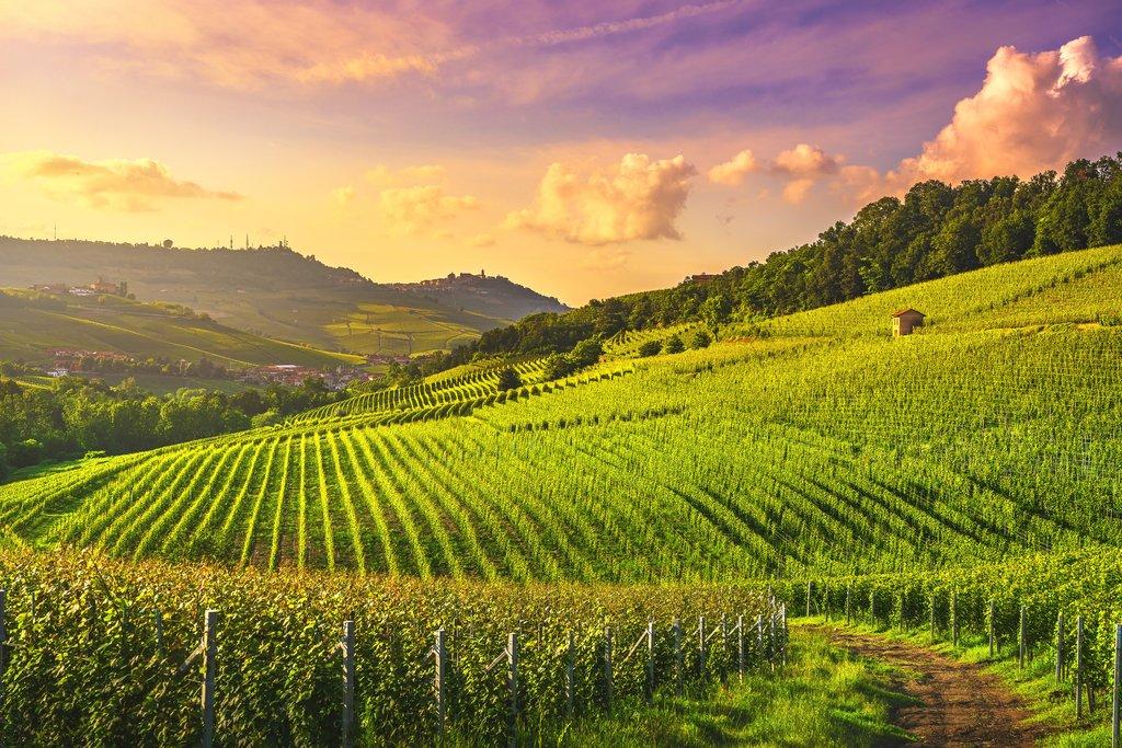 Kebun Anggur Paling Lezat di Sisilia