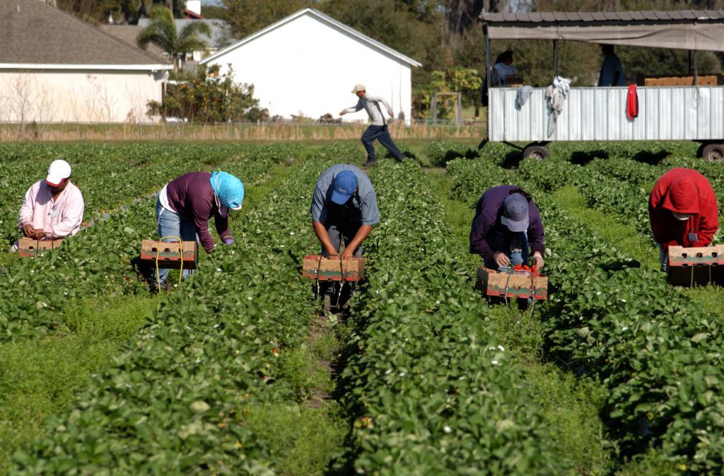 Apa yang Dibutuhkan Petani Italia untuk Mengatasi Tantangan COVID 19