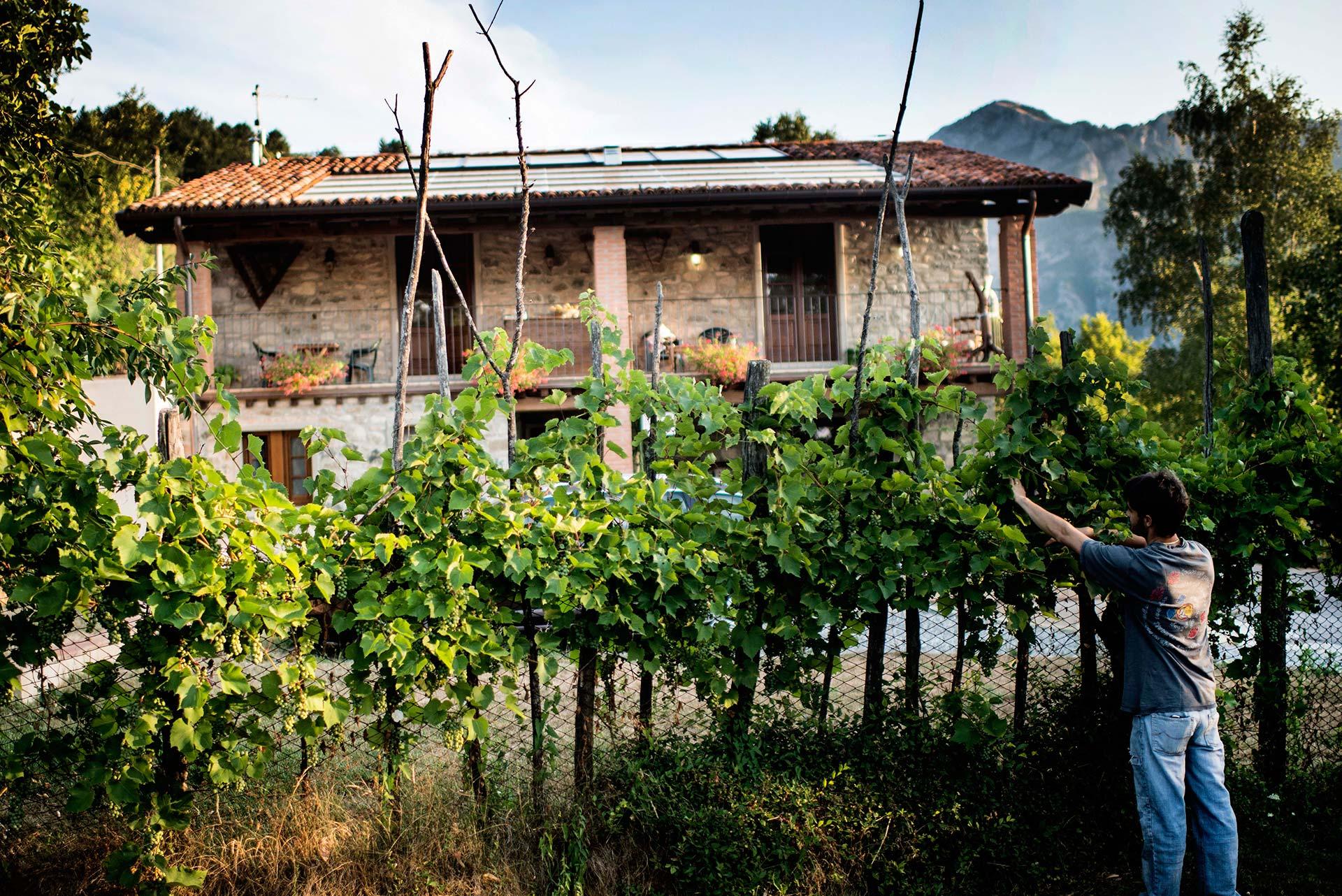 Digitalisasi, Beragam Pertanian, dan Ketahanan Pedesaan di Italia
